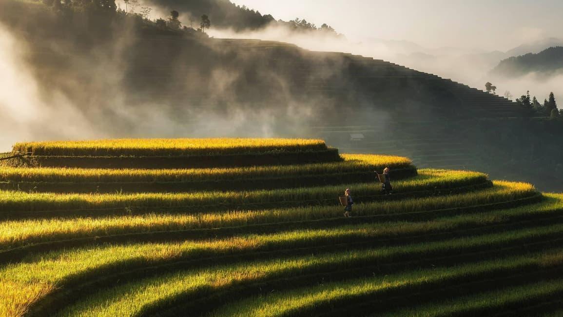 Ben's Original German Website Rice Growing Content Feature
